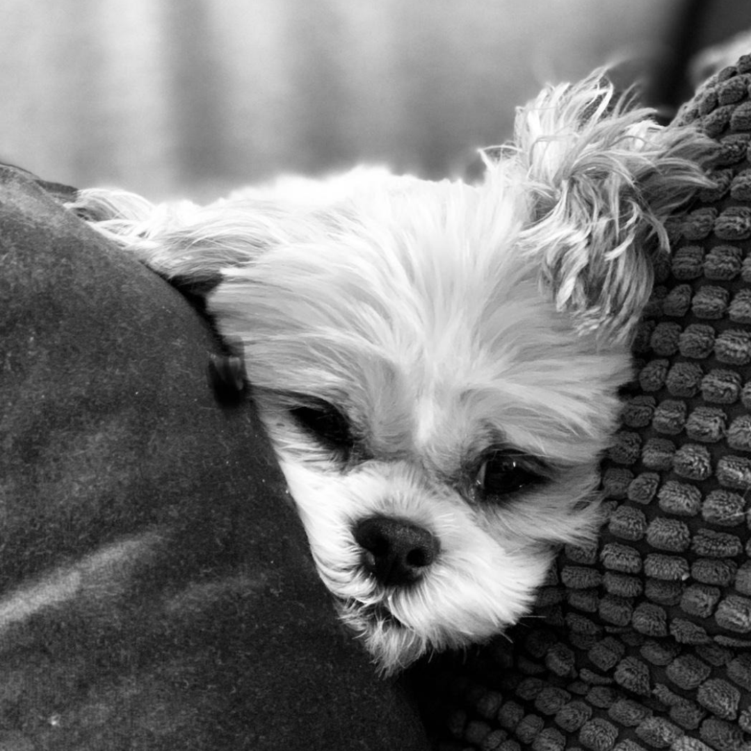 Dappere hondjes huilen ook wel eens